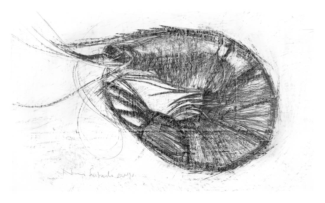 Nimi Furtado | Limited Edition Prints | Shrimp